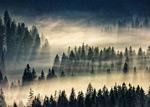 云雾缭绕的森林
