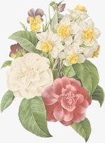 手绘插画植物花朵