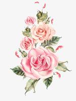 手绘玫瑰花束