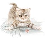 水彩手绘猫