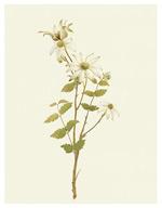 色花的花卉植物