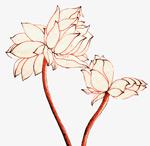 手绘莲花叶子