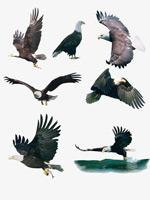 各造型雄鹰