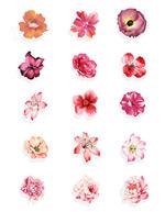 水彩清新花朵