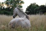 草丛里的马
