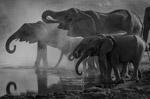 河边喝水的大象