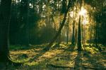 阳光沐浴的森林