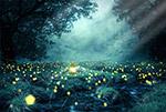 梦幻森林夜景