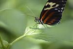 叶子上的蝴蝶