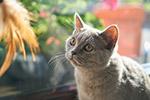 灰色可爱小猫