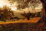 日落树林风景