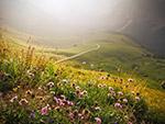 山地野花景观