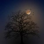 万圣节树影