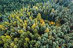秋天的树林景色