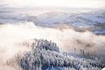 冬天森林景色