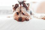 可爱的小狗