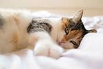 可爱宠物猫