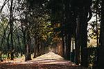 阳光下的树林小道