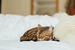 睡觉的家猫