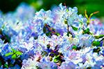 美丽盛开花朵
