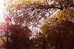 秋季树木景色