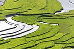 绿色梯田图片