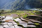 水稻梯田图片