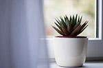 室内多肉植物