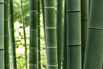 绿色竹林景色