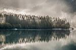 湖畔松树林