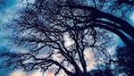 光秃秃的树木