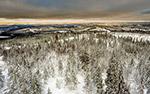白雪覆盖森林