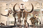 博物馆恐龙化石