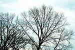 光秃秃的树