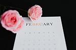 情人节玫瑰日历