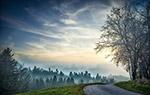 日落森林景观