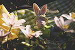 �突罟�兔子
