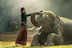 女孩抚摸大象