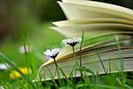 书页和野花