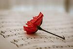 乐谱和红玫瑰
