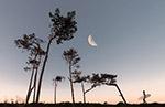半月和树木