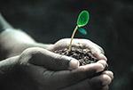 手捧发芽植物
