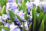 紫色花卉特写
