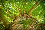 仰望绿色大树