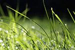 带露珠的草地