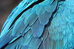 鹦鹉的羽毛