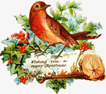 圣诞节鸟儿