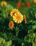 杂草野花模型