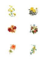 中国画菊花