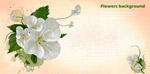 白色绘画花朵